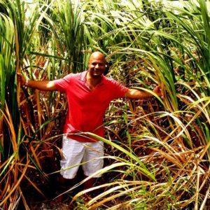 Sugar Cane ~ Barbados 🇧🇧